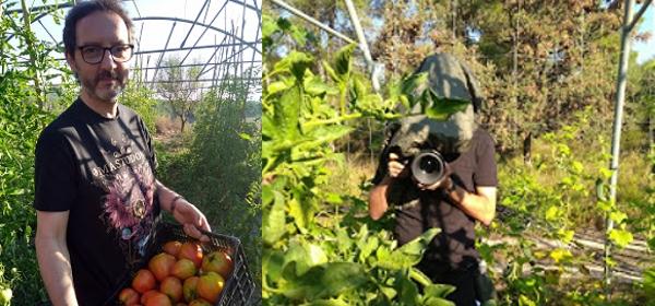 Gravant tomàquets i tomaqueres